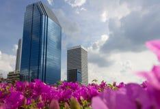 现代大厦蚂蚁景色和蓝天,开花桃红色foreg 库存图片