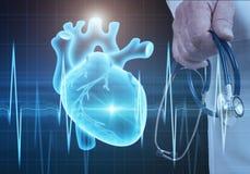 现代医学心脏病学概念 库存照片