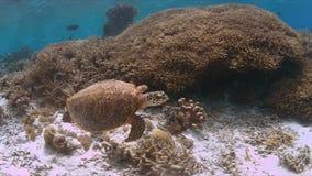 玳瑁在珊瑚礁游泳 库存照片