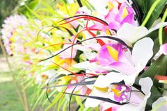 玻利尼西亚头状花序花圈背景 库存照片
