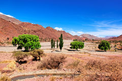 玻利维亚沙漠结构树 库存图片