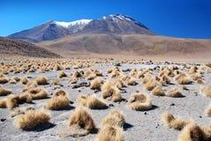 玻利维亚的沙漠横向  库存照片