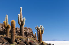 玻利维亚 免版税库存照片