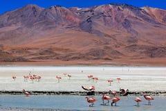 玻利维亚celeste拉古纳 免版税库存照片