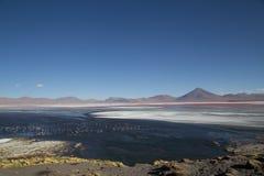 玻利维亚colorada拉古纳 免版税库存照片