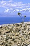 玻利维亚del isla sol 免版税库存照片