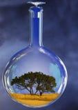 玻璃反击结构树 库存照片
