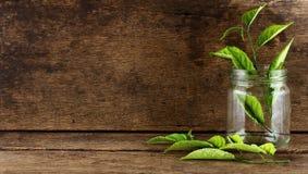 玻璃和叶子在老木和木纹理 免版税库存图片