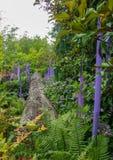 玻璃和有生命的植物蓝色和绿色森林  库存照片
