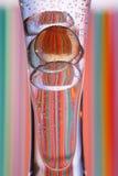 玻璃小卵石花瓶 免版税图库摄影