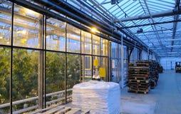 玻璃温室内部 库存照片