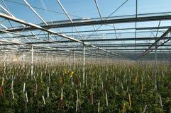 玻璃温室屋顶 库存图片