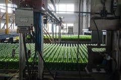 玻璃瓶工厂在秋明州 俄国 免版税库存照片