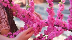 玻璃的年轻偶然加工好的女孩嗅到佐仓花和微笑入照相机 在面孔春天概念的焦点 股票录像