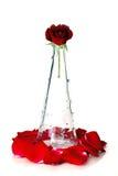 玻璃红色玫瑰色花瓶 免版税库存照片