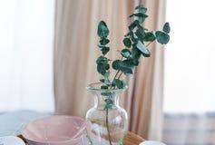 玻璃花瓶的绿色植物在桌上在房子客厅 免版税库存照片
