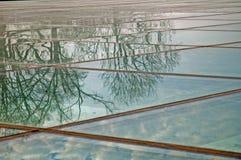 玻璃被反射的结构树 免版税库存照片