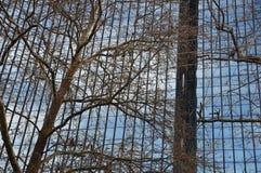 玻璃门面和树枝 免版税图库摄影