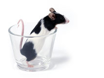 玻璃鼠标 库存图片