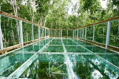 玻璃skywalk在桦树森林里 图库摄影
