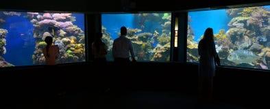 珊瑚世界水下的观测所水族馆在埃拉特以色列 免版税库存照片