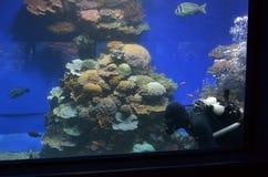 珊瑚世界水下的观测所水族馆在埃拉特以色列 图库摄影