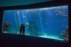 珊瑚世界水下的观测所水族馆鲨鱼水池在Eil 免版税图库摄影