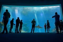 珊瑚世界水下的观测所水族馆鲨鱼水池在Eil 库存照片