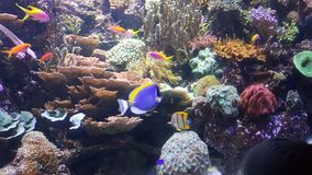 珊瑚五颜六色的鱼 免版税图库摄影