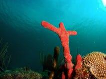 珊瑚交叉 免版税库存图片