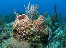 珊瑚从事园艺roatan的洪都拉斯 免版税图库摄影
