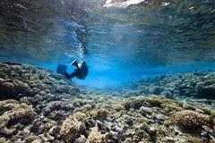 珊瑚佩戴水肺的潜水 免版税库存照片