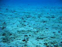 珊瑚停止的礁石 库存图片