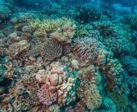 珊瑚健康礁石 免版税库存图片