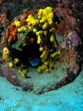 珊瑚击毁 免版税库存图片
