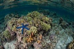 珊瑚包围王侯的Ampat石灰石海岛 免版税库存图片