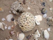 珊瑚和壳,海边 库存照片