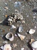 珊瑚和壳 免版税库存照片