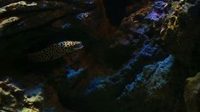 珊瑚和异乎寻常的海鱼 股票视频