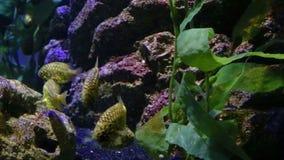 珊瑚和异乎寻常的海鱼 股票录像