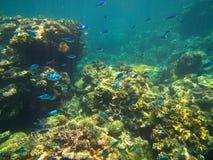 珊瑚和鱼在大堡礁,澳大利亚 免版税图库摄影