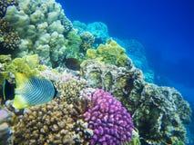 珊瑚困难红色礁石海运 库存照片