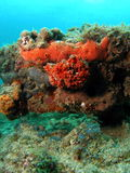 珊瑚土墩桔子 免版税库存图片