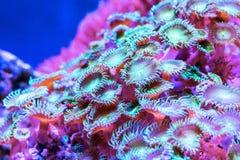 珊瑚在水下的热带海 库存图片