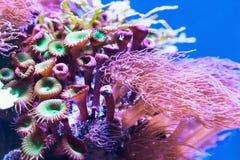 珊瑚在水下的热带海 免版税库存图片