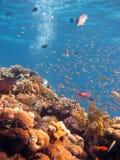 珊瑚场面 免版税库存照片