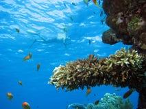 珊瑚场面 图库摄影