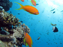 珊瑚场面 库存图片