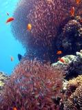 珊瑚场面 免版税图库摄影