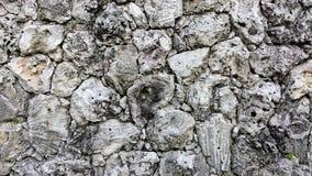 珊瑚墙壁由织地不很细和独特的珊瑚岩石做成块  免版税库存图片